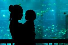 Cucoloris dans l'aquarium à Singapour photos stock