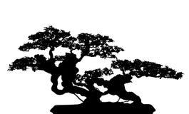 Cucoloris dos bonsais Fotografia de Stock Royalty Free