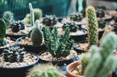 Cuctus-Blume stockfoto