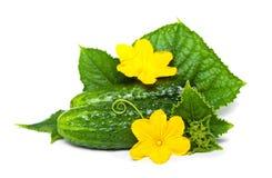 Cucubmer with leaf and flower Stock Photos