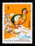 Cucullatus Raphus додо, потухшее serie птиц, около 1974 Стоковое Изображение RF