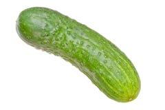 Cucumber. Isolated on white background stock image