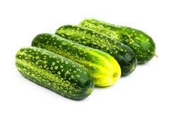 Cucumber Royalty Free Stock Photo