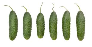 Free Cucumber Stock Images - 106607524
