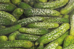 Free Cucumber Royalty Free Stock Image - 11295496