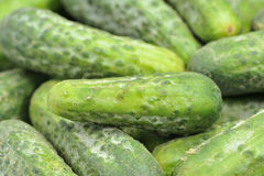 Free Cucumber Stock Photo - 11331740