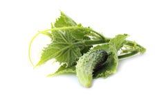 Cucumber. Isolated on white background close-up photo royalty free stock photo