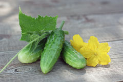 Cucumber. Fresh Cucumber on wooden board Royalty Free Stock Photo