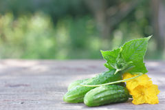 Cucumber. Fresh Cucumbers on wooden board Stock Photography