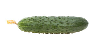Cucumber. Royalty Free Stock Photography