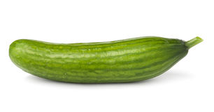 Cucumber. Single cucumber against white background Stock Images