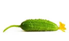 Cucumber Royalty Free Stock Photos