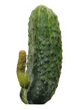 Cucumber. With a shoot in the form of a penis Stock Photos