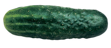 Cucumber. Fresh cucumber royalty free stock photo