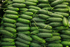 Free Cucumber Royalty Free Stock Photos - 63147448