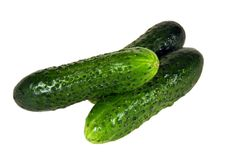 Cucumber Stock Photography