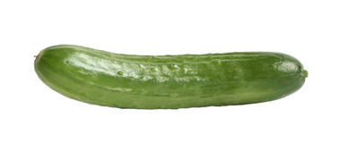 Cucumber. Fresh cucumber on a white background Royalty Free Stock Photo