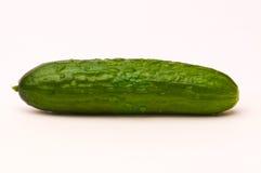 Cucumber Stock Photography