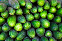 Cucumber background Royalty Free Stock Image