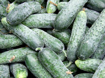 Cucumber background. A lots of cucumber exposed on traditional market ready for sell Royalty Free Stock Photography