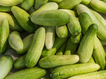 Cucumber background. Cucumber on table for sale Stock Photos