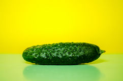 Cucumber, background, yellow, green Royalty Free Stock Images