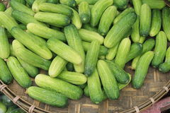 Cucumber in basket Royalty Free Stock Photo