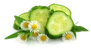 Cucumber with a camomile Stock Image