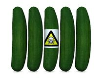 Is cucumber so dangerous? Stock Image