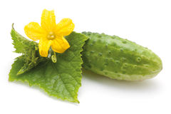 Cucumber with flower Stock Photography