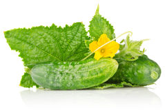 Cucumber with flower and leaves. On white background Royalty Free Stock Photography