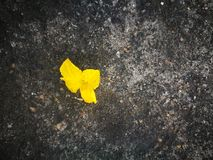 Cucumber flower lying on the hard ground Stock Photo
