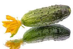 Cucumber with flower Royalty Free Stock Photos