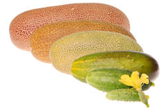 Cucumber from flowering up to ripe Stock Photo