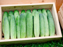Cucumber. Fresh green cucumber collection outdoor on market Stock Images