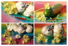 Cucumber, garlic, and butterfly Royalty Free Stock Photo