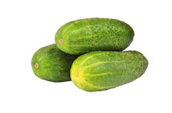 Cucumber gherkin. Fresh green cucumber gherkin, isolated on a white background Royalty Free Stock Photos