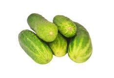 Cucumber gherkin Stock Images