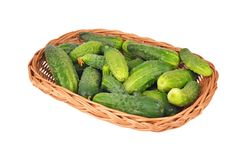 Cucumber gherkin in a wattled basket Royalty Free Stock Images