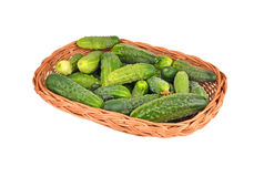 Cucumber gherkin in a wattled basket Royalty Free Stock Photo