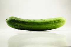 Cucumber. Green and white background Royalty Free Stock Photos