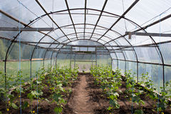 Cucumber greenhouse Stock Photo