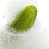 Cucumber in ice Stock Photography