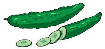 Cucumber illustration Stock Photos