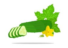 Cucumber. The illustration which shows some vegetables - cucumbers Stock Photos
