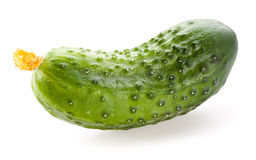Cucumber isolated. On white background Royalty Free Stock Images