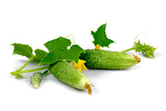 Cucumber with leaf Stock Images