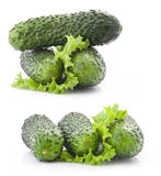 Cucumber and leaf lettuce Royalty Free Stock Image