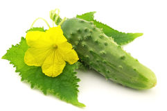 Cucumber with leaves Stock Images