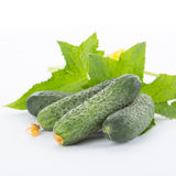 Cucumber with leaves. On a white background Royalty Free Stock Photo